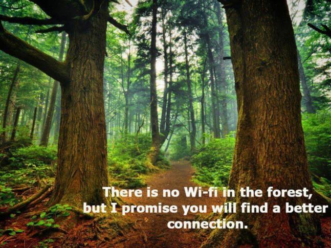 wififorrestconnection