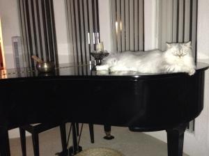 Classy Cat!