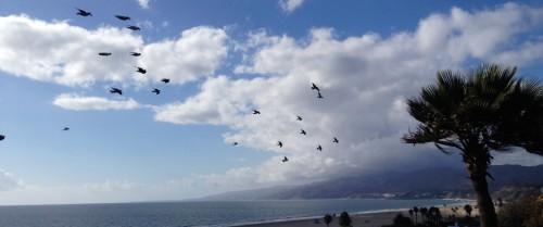 BirdsClouds